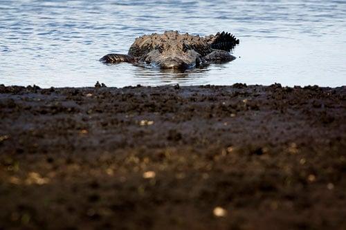 photoflavor-gatorstare