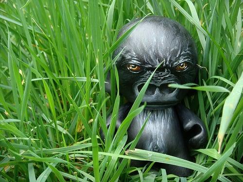 gorilla munny