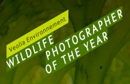 Wildlife Competition Miffs Photographers with New Megapixel Requirement vnwpoty