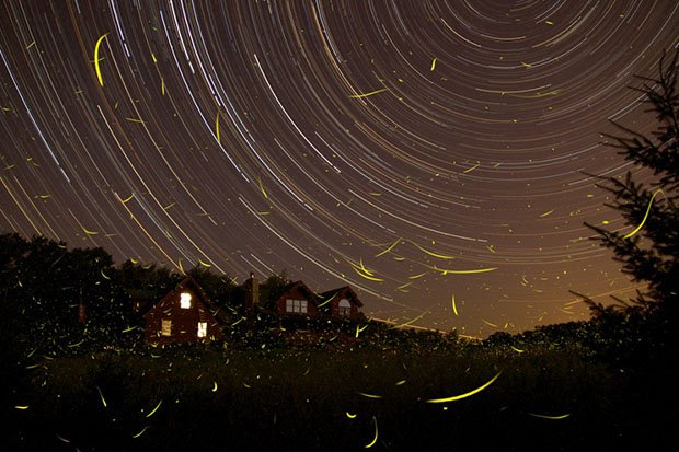 Beautiful Long Exposure Shot of Fireflies and Star Trails fireflies