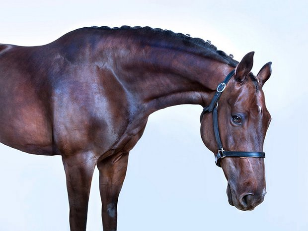 Emotive Portraits of Majestic Horses horse1 mini