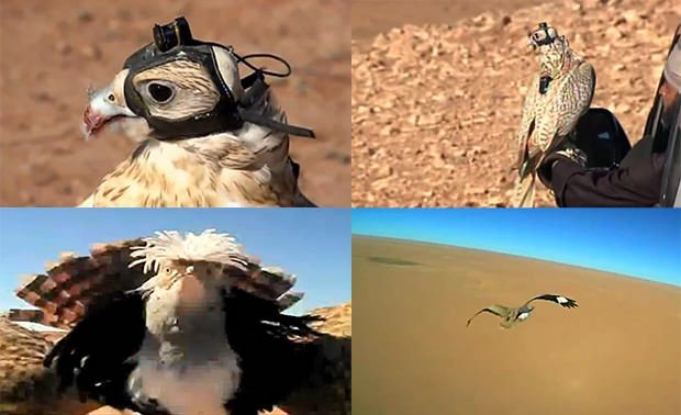falcon_mini.jpg