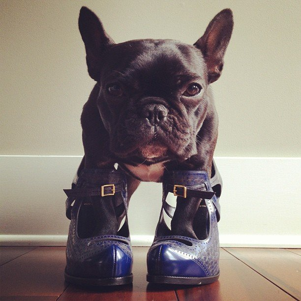 Image result for dogs wearing high heels