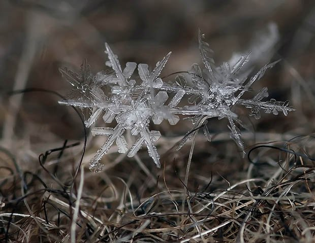 Ethereal Macro Photos of Snowflakes in the Moments Before They Disappear macrosnow 1