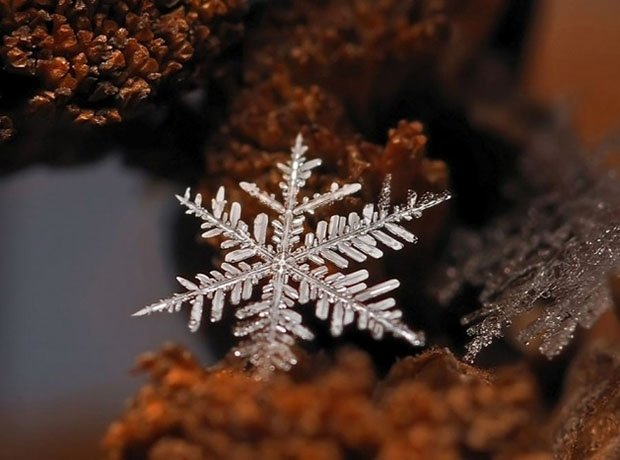 Ethereal Macro Photos of Snowflakes in the Moments Before They Disappear macrosnow11