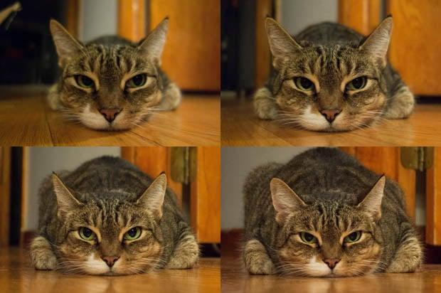 catfocallengths
