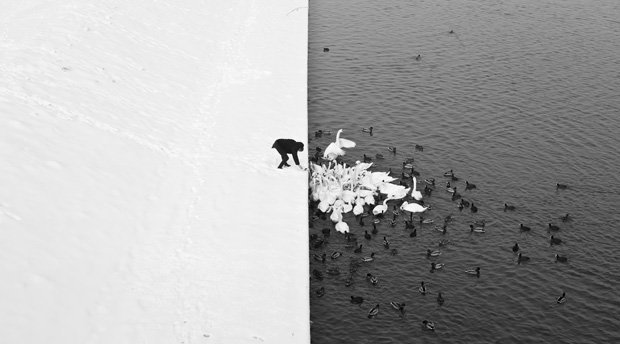 Polish photographer marcin ryczek captured this gorgeous black and white photograph of a man feeding ducks and swans in kraków poland heres a high res