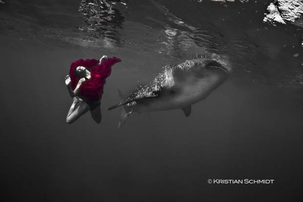 whalesharkfashionshoot-2