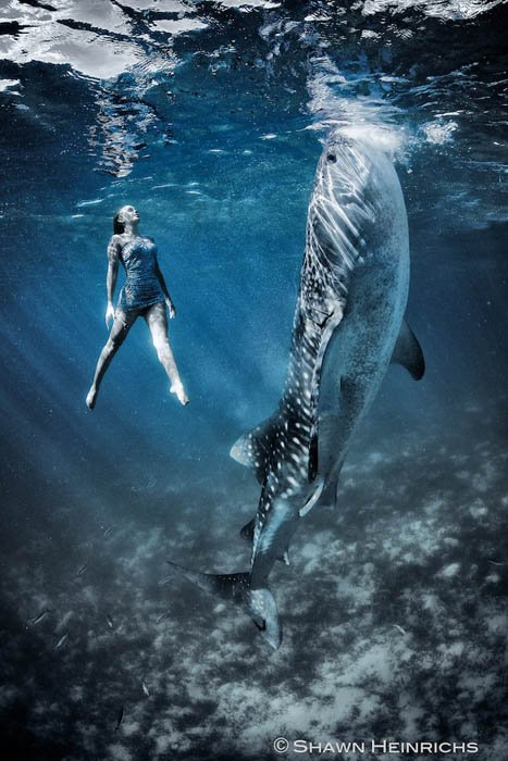 whalesharkfashionshoot-6