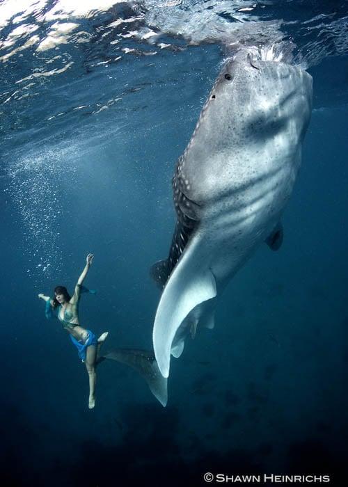 whalesharkfashionshoot-7