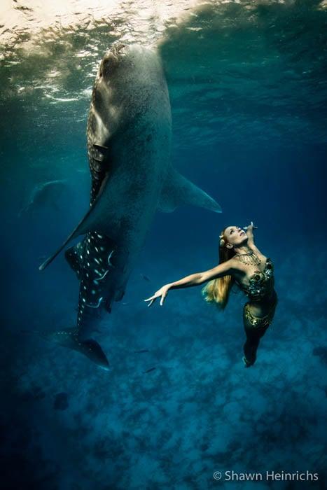 whalesharkfashionshoot-9