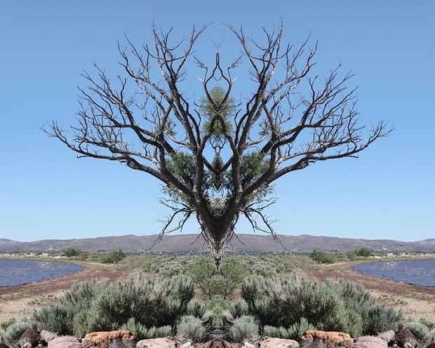 24x30_reno_tree1