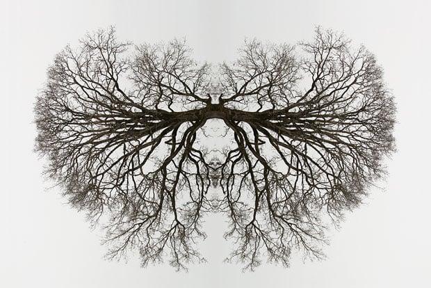 30x20_tree_organ2