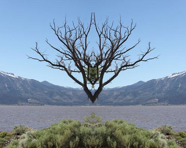 30x24_Reno_tree1