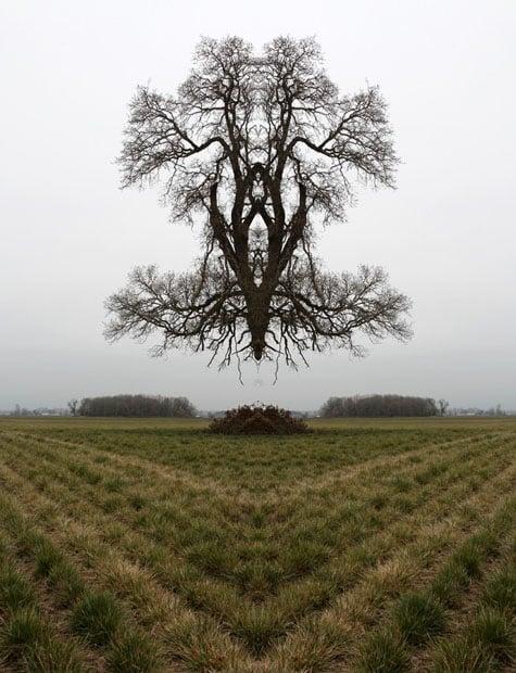 46x60_portland_tree1-785x1024