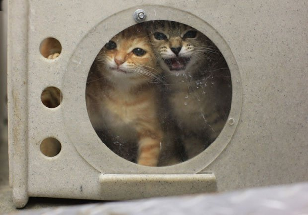 Disturbing Photos Capture The Realities Of Euthanization At Animal - Take look inside one amazing cat sanctuaries world
