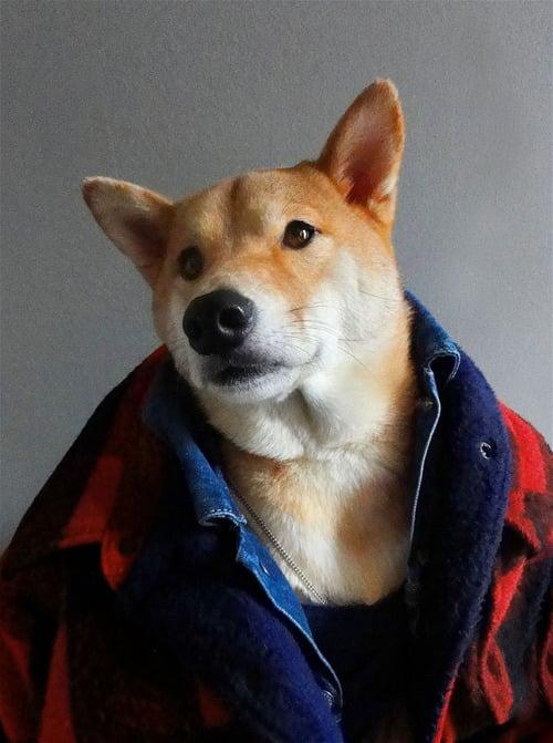 dogmenswear-12