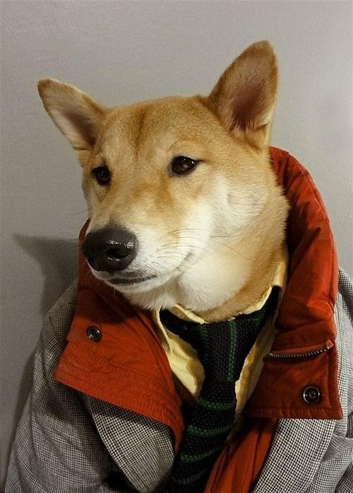 dogmenswear-13