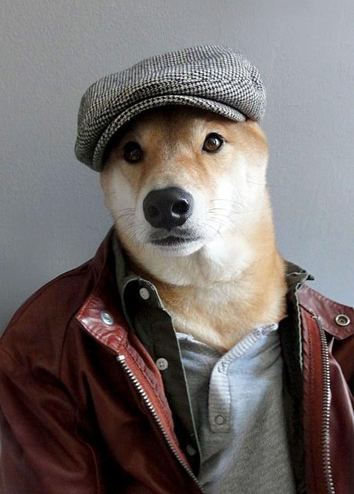 dogmenswear-2
