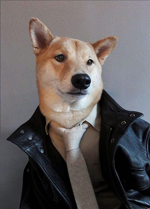 dogmenswear-4