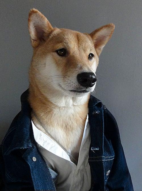 dogmenswear-8