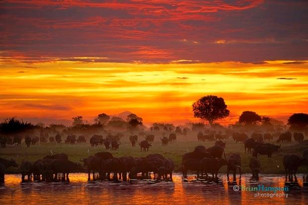 Hampton Buffalo Sunset PetaPixel_2113R1