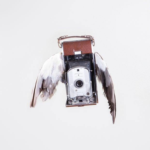 birds-2 copy