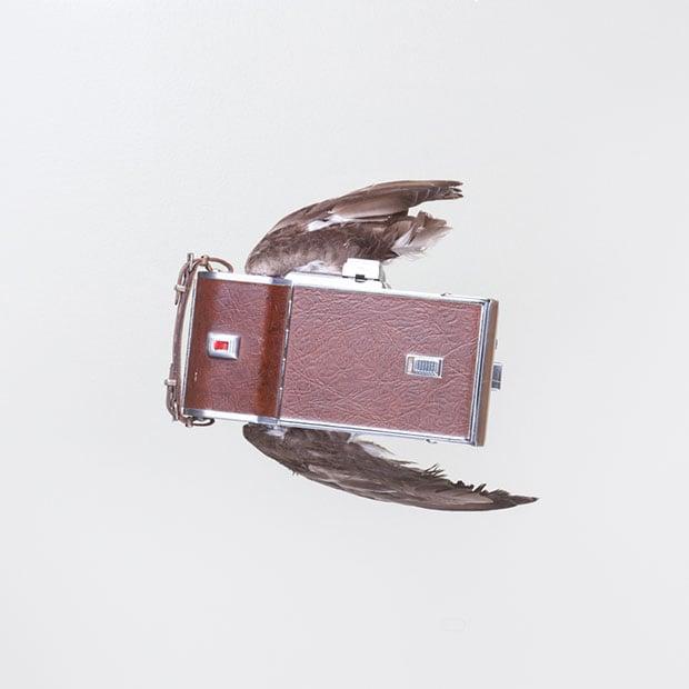 birds-3 copy