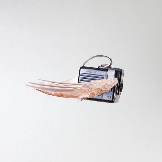 birds-4 copy
