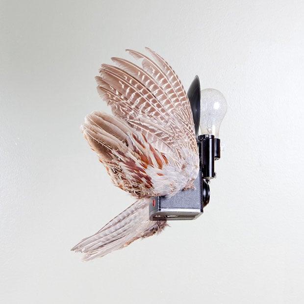 birds-9 copy