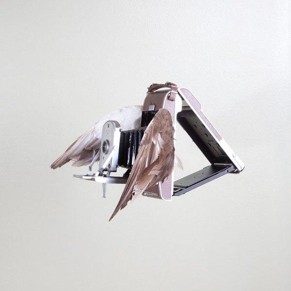 birds_grande copy