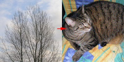 treetocat