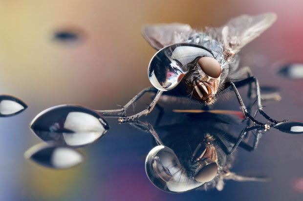 Incredible Macro Photos of Insects with Drops of Water On Their Heads waterdropinsects 1