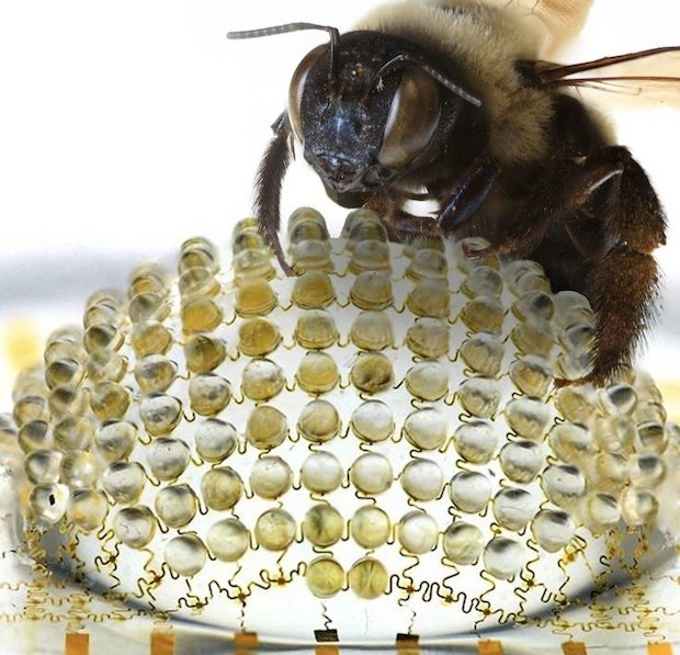 First Working Compound Eye Cam Gets a Bee's-Eye-View of ... Biggest Insect In The World