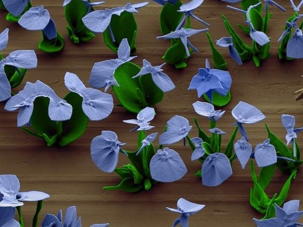Blue crystal flowers