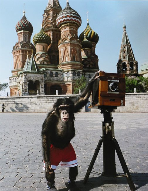 Chimpanzee's Photographs Set to Fetch Over $100,000 At Auction