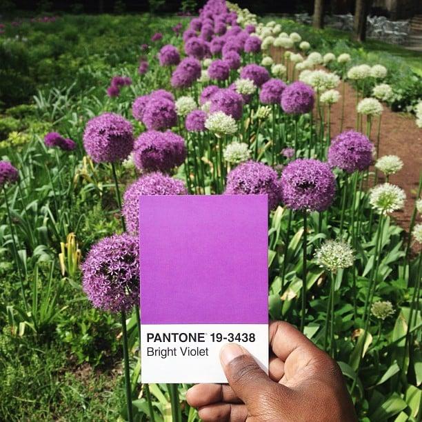 pantone6