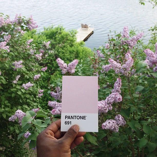 pantone8