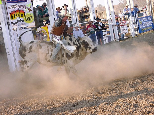 800px-Bull_riding_at_Toogoolawah_show