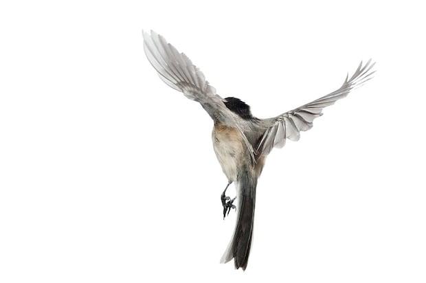 aviary1