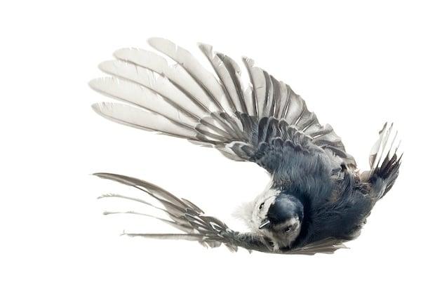 aviary13