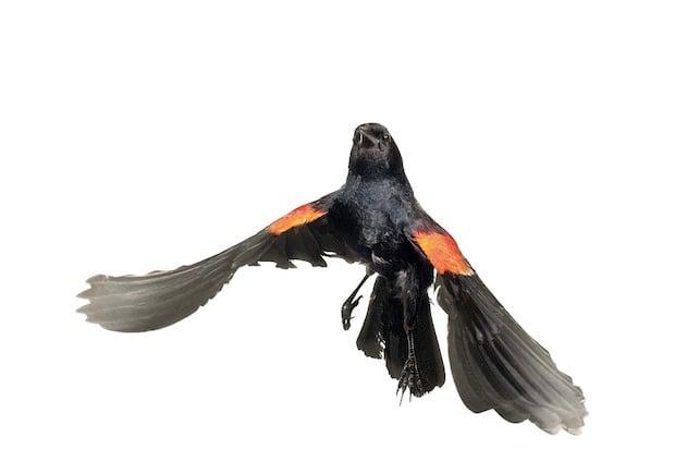 aviary5