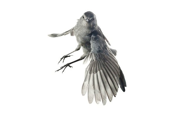 aviary6