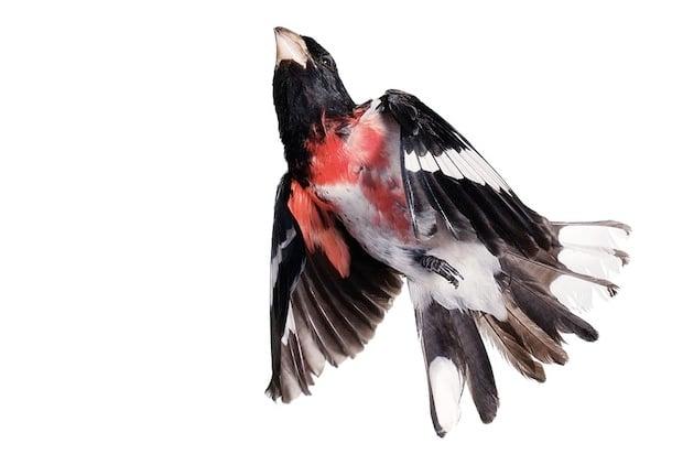 aviary8
