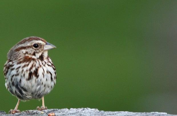 birdphotography1