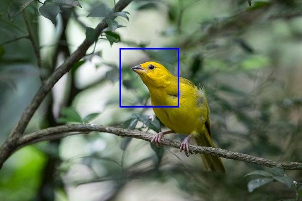 yellow bird copy