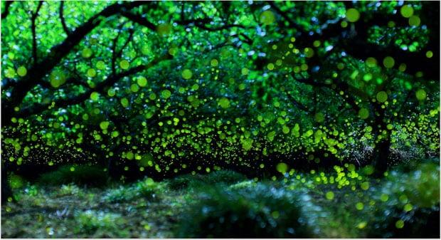 yumefireflies-1