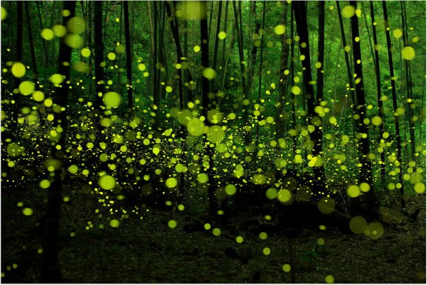 Starry Long Exposure Photos of Fireflies in the Forests of Japan