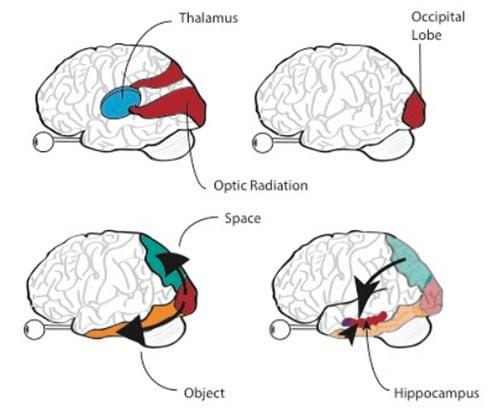 Memories photographs and the human brain brain ccuart Choice Image
