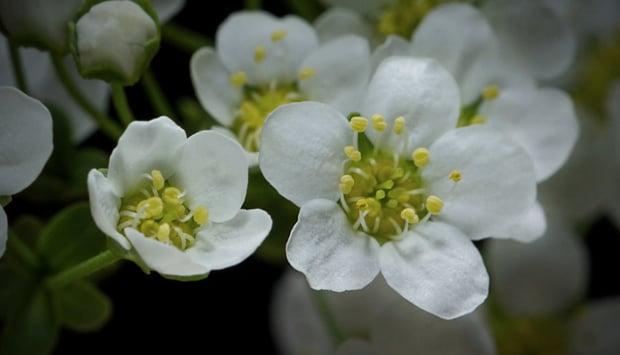 flowertimelapse1